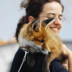I want a pet fox ♥