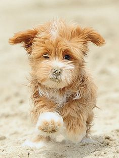 Dogs are said to be some of the best pets to keep. There are many breeds of dogs Cute Puppies, Cute Dogs, Dogs And Puppies, Doggies, Baby Dogs, Baby Animals, Funny Animals, Cute Animals, Tier Fotos