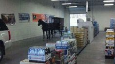 Amish buggy at a beer distributor (New Castle, PA)