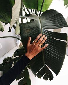 palm aesthetic
