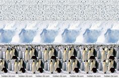 Animals Stereogram Gallery : Emperor Penguines : Stereogram Images, Games, Video and Software. All Free! 3d Hidden Pictures, Magic Eye Pictures, Hidden Images, 3d Pictures, 3d Stereograms, 3d Maze, Eye Illusions, Gravitational Waves, Image 3d