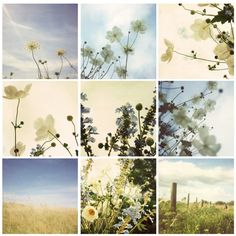 Floral photo montage.
