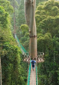 Borneo Rainforest Canopy Walkway, Malasia