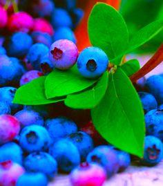 Splash of blueberries • photo: Datacraft Co Ltd on Getty Images