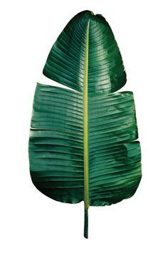 Clinton Friedman print collections, botanical