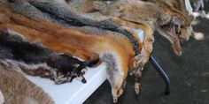 """Anche la Croazia dice basta agli allevamenti di animali da pelliccia. LAV: """"E l'Italia?"""""""