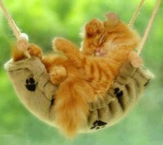 Kitten Ginger Fur, sleeping in a cat hammock Kittens Cutest, Cats And Kittens, Cute Cats, Funny Kitties, Cat Fun, Funny Pets, Crazy Cat Lady, Crazy Cats, Animals Beautiful
