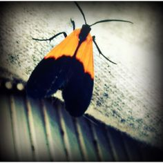 Pretty bug!