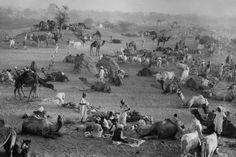 by Marc Riboud Camel Market, Nagaur, Rajasthan, India, 1956.