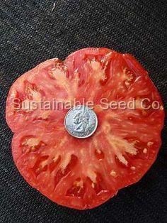 Organic Ferris Wheel Tomato - Heirloom Seeds: Sustainable Seed Company