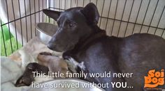 THE POWER YOU HAVE TO CHANGE SO MANY LIVES. Just one family rescued, cared for…