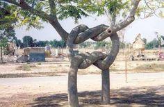 Los árboles son maravillosos porque pueden vivir cientos de años, cambiar de forma, crecer y contar muchas historias en sus ramas y sus troncos. Realmente son admirables, sirven a muchos propósitos de utilidad y nos dan de comer. ¿No son realmente geniales? Si te gustan tanto como a mi, seguro te encantarán estos