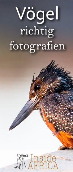 Vögel richtig fotografien, wir geben Euch Tipps und Beispiele.