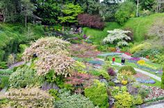 Springtime at Butchart Gardens Sunken Garden, Spring Time, Aunt, Gardens, Explore, Flowers, Plants, Outdoor Gardens, Garden