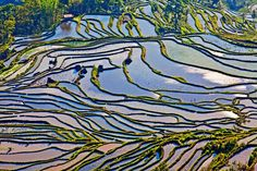 13 Toma aérea de las terrazas de arroz de Yuanyang County, Yunnan, China