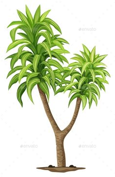 Buy The Queen of Dracaenas Plant by BlueRingMedia on GraphicRiver. Illustration of the Queen of Dracaenas plant on a white background