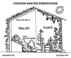 Permaculture: chickens, buildings, & forests can be designed to work together as a productive self-regulating system.