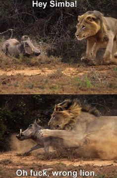 Funny pictures about Wrong lion. Oh, and cool pics about Wrong lion. Also, Wrong lion. Funny Cute, The Funny, Funny Test, Funny Photos, Funny Images, Funniest Pictures, Jokes Photos, Funny Pictures Can't Stop Laughing, Funny Jokes
