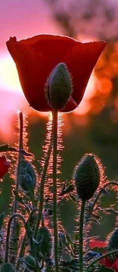 ✿▪✿▪✿ Flower ✿▪✿▪✿
