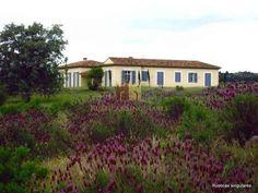 Finca con casa en Cáceres - Rusticas Singulares