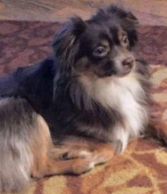 LOST DOG: 08/10/2017 - Glendale, Arizona, AZ, United States. Ref#: L35038 - #CritterAlert #LostPet #LostDog #MissingDog