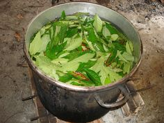"""ayahuasca...A conversation with """"Medicine Hunter"""" Chris Kilham about the plant's psychedelic healing powers."""