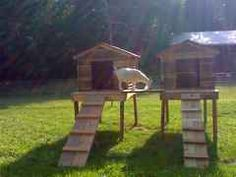 Goat housing built up on platforms, ramps, with a bridge between the two houses. Two pre-built dog houses can also be used for this plan.