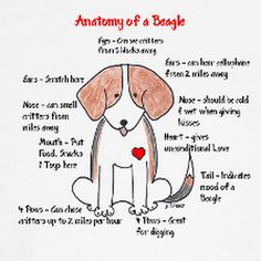 Are you interested in a Beagle? Well, the Beagle is one of the few popular dogs that will adapt much faster to any home. Dog Training Methods, Basic Dog Training, Training Your Puppy, Training Dogs, Yorkshire Terrier, Pet Dogs, Dogs And Puppies, Doggies, Positive Dog Training