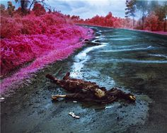 Richard-Mosse-Wave-of-Mutilation-2012.jpg (800×640)
