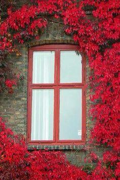 Ventana con un marco de flores rojas increíbles