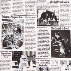 white cat newspaper fabric by Timeless Treasures USA 1