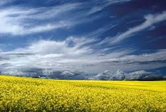 take your breath away. Rapeseed Field, Breathe, Clouds, Mountains, Travel, Outdoor, Life, Image, Beautiful