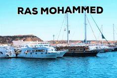 Nationalpark Ras Mohammed ist eines der schönsten Unterwasserwelten Weltweit. Erlebniswelt Sharm El Sheikh.  #travel #diving #snorkling #love #egypt #rasmohammed #underwater #experince Ballet Flats Outfit, Lace Up Ballet Flats, Sharm El Sheikh, Hotels, Travel Videos, Red Sea, Sailing Ships, Boat, Highlights