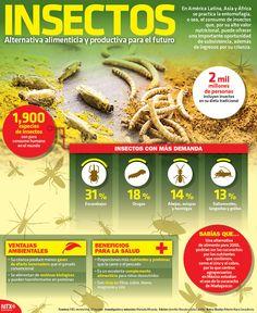 En América Latina, Asia y África se practica la entomofagia, o sea, el consumo de insectos que, por su valor nutricional, se considera una alternativa alimenticia y productiva para el futuro. #Infographic