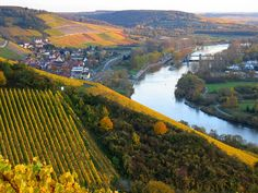 Vineyard in Franconia, Germany