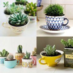 Como plantar suculentas e cactos nas xícaras, já que na maioria das vezes não dá para furar antes de colocar a planta? Confira nosso passo a passo!