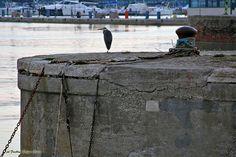 Il guardiano del porto. -Fano-