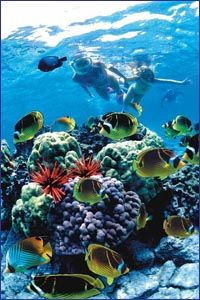 Boat Tours in Hawaii from Kailua-Kona - It's like finding Nemo in real life