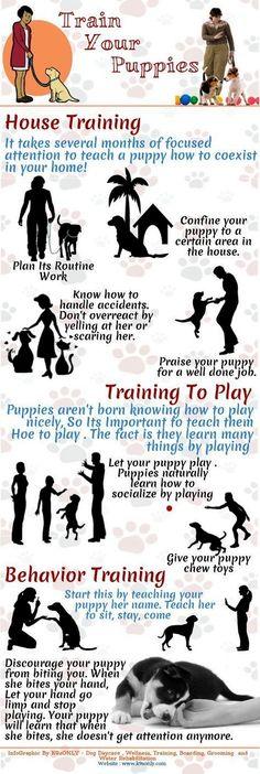 Dog Training Ideas - CLICK PIC for Many Dog Obedience and Care Ideas. #dogtraining #dogtrainingideas