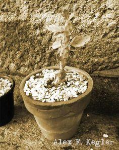 Alex photograph project: Cactus II...