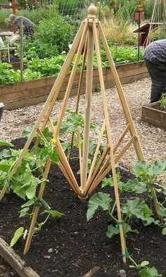 Reuse picnic table umbrella frame as trellis