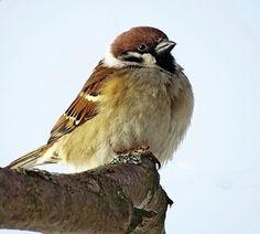 Ukraine, Birds, Paintings, Animals, Animales, Paint, Animaux, Painting Art, Bird