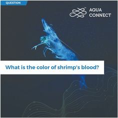 Shrimp is something we all like! But how many of you know what the color of shrimp's blood is? Sustainable Farming, Machine Learning, Interesting Facts, Fun Facts, Shrimp, Blood, Aqua, This Or That Questions, Cool Facts
