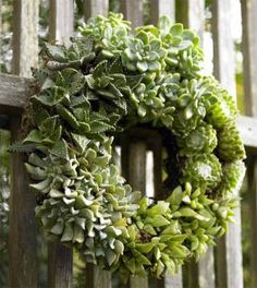 wreath of succulents...i want to make one of these!