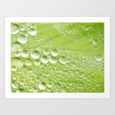 Collect your choice of gallery quality Giclée, or fine art prints custom trimmed by hand in a variety of sizes with a white border for framing. #Morningdew #dewdrops #waterdrops #nature #macro #leaf #drops #dew