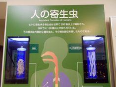 Tokyo A parasite  Museum.