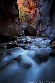 Emerging Natural Beauty  Wildlife Photographer Alex Mody Creative Design   farshid ramezani ,