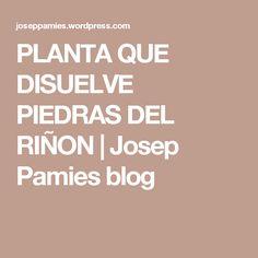 PLANTA QUE DISUELVE PIEDRAS DEL RIÑON | Josep Pamies blog