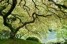 Japanese Gardens, Portland, Oregon (My home :) )