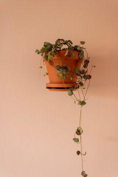 F L O A T I N G green plants on the plant wall.   #plant #interiør #planter #grønneplanter #mithjem #blomster #hjem #indretning #grønthjem #grøn #miljø #slowliving #slowfood #urbangarden #urbanfarming #småhjem #design #danskdesign #nordiskehjem #nordisk #danskproduceret #smallspaces #plantstagram Plant Wall, Green Plants, Green Leaves, Planter Pots, Interior, Indoor, Living Walls, Interiors, Foliage Plants
